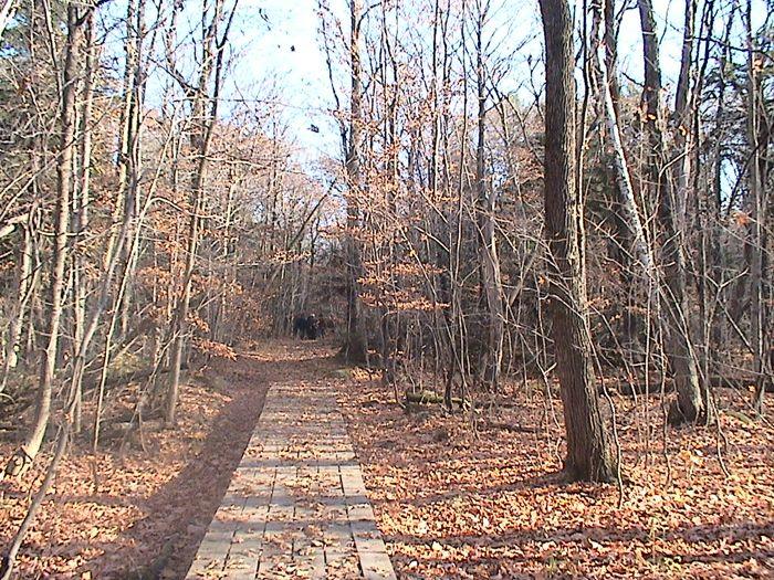 Le Sentier d'un Flâneur-la forêt - 03